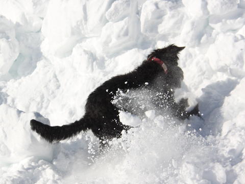 Suchhunde Winter 3